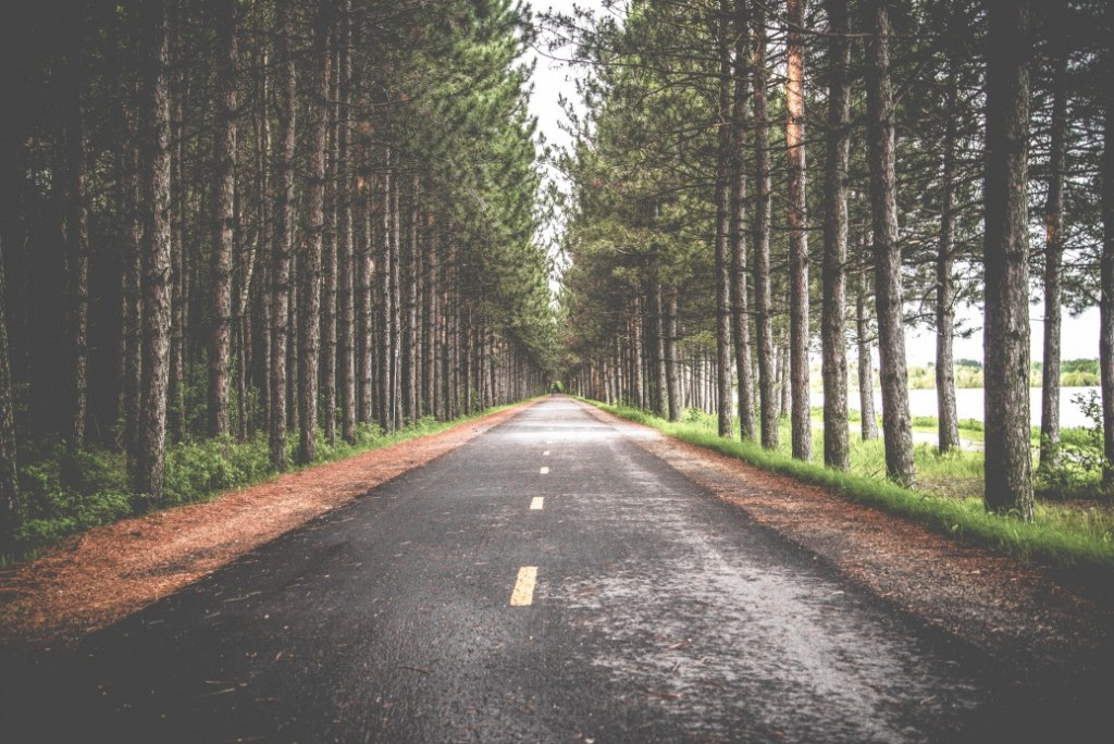 Contented Gypsy | Intentional Living Road Through Forrest